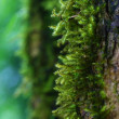 Close up moss on tree — Stock Photo