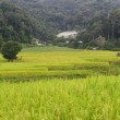Step paddy field — Stock Photo