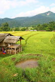 Terraced rice fields and house view, Thailand — Stock fotografie
