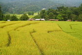 Terraced rice fields view, Thailand — Stockfoto