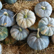 Stock Photo: Dry pumpkin in farm Thailand