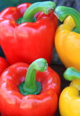 Close up red and yellow paprika — Stock Photo