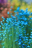 Close up colorful small grass flower — Stock Photo