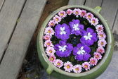 Purple flower in water pot — Stok fotoğraf