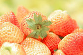 Close up strawberry in Thailand — Stock Photo