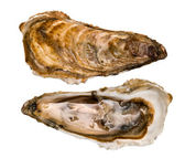 Two oysters closed and open on a white background — Stock Photo