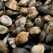 Clams vongole — Stock Photo