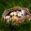 Stock Photo: Nest