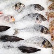 Stock Photo: Fish counter