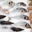 Fish counter — Stock Photo