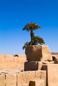 Egyptian temple in Luxor — Stock Photo