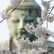 Stock Photo: The great buddha in Kamakura Japan.