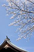 在日本神社在日本樱花 — 图库照片