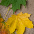 Top view of autumn colored maple leaves on top of wooden surface — Stock Photo
