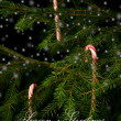 Candy canes hanging on christmas tree behind snowflakes. — Zdjęcie stockowe