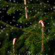 Candy canes hanging on christmas tree behind snowflakes. — Stock fotografie