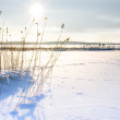 Stock Photo: Landscape of frozen sea.