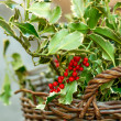 Christmas Holly in the basket on the market. — Stock Photo