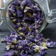 Mallow dried flowers coming out of jar — Stock Photo