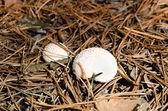 White mushrooms — Stock Photo