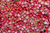 Frozen red currant — Stock Photo