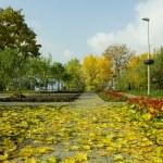 Autumn — Stock Photo #33814517