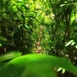 Steadicam Shot Thu Lush Forest (Slow Motion) — Stock Video