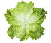 Fresh lettuce leaves — Stock Photo