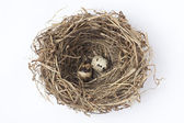Two eggs in a nest — Stock Photo