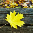 A maple leave on a fallen tree — Stock Photo