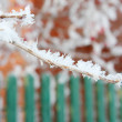 Beautiful branch in frost at winter day against green fence. — Stock Photo