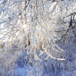 Beautiful bushes in frost in winter and sun shines through branc — Stock Photo