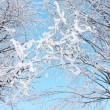 Beautiful bushes in frost in winter ay background of blue sky. — Stock Photo #33941371