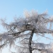Beautiful tree in frost in winter ay background of blue sky. — Stock Photo #33941507