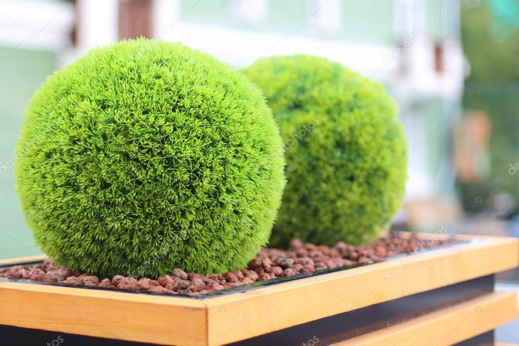 Dois arbustos verdes decorativos em forma de bola no vaso for Arbustos decorativos