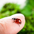 Ladybug on a green background — Stock Photo