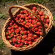 Strawberries in a basket — Stock Photo