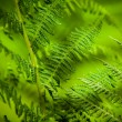 The young, green fern. Background for your design — Stock Photo #35506979