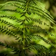The young, green fern. Background for your design — Stock Photo #35506993