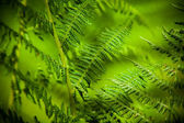 The young, green fern. Background for your design — Stock Photo