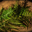 Fern on wooden table — Stock Photo #39855737