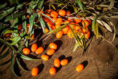 Hippophae rhamnoides on wooden table — Stock Photo