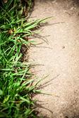 Grass carpet — Stock Photo