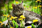 Gato doméstico — Foto Stock