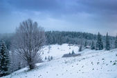 Landscape with snow covered trees. — Stock Photo