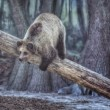 Brown bear in zoo — Stock Photo #29379071