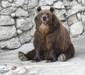 A bear — Stock Photo