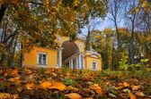 Gold autumn — Stock Photo