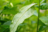 Rain drops on a leaf — Stock Photo