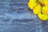 Dandelion flowers on a wooden table — Stockfoto